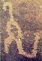 Tyrannosaurus Canyon A  tyrannosaur  pictogram